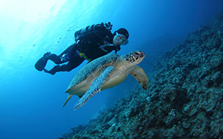 奄美大島のダイビングショップには珍しくガイドは2名。ダイビング中、ウミガメに出会うことも!