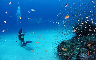 カメラ好きのダイビング・インストラクターが奄美大島のダイビング・ポイントをご案内します。